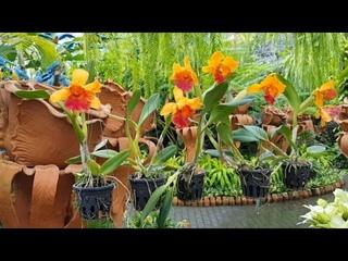 Тропический сад мадам Нонг Нуч//Паттайя//Тайланд