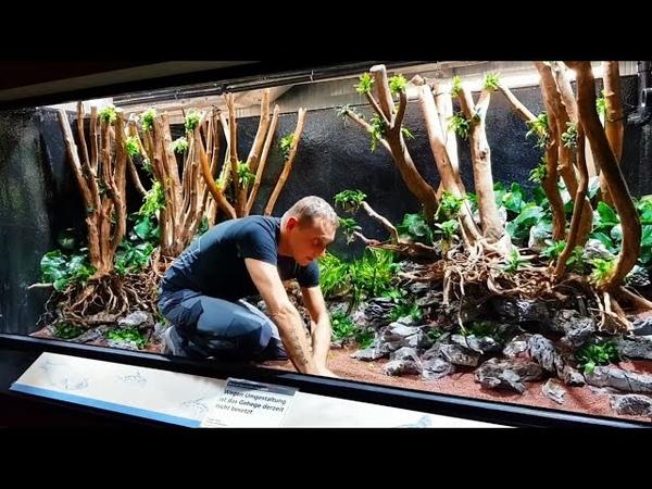 5 400 Liter Planted Tank by Oliver Knott Beautiful Planted Aquarium Setup