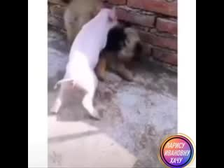 Ты кого свиньей назвал 😁