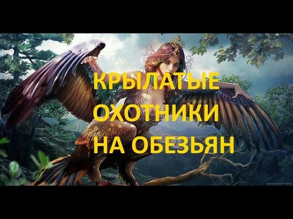 Крылатый охотник на обезьян Эта летающая бестия способна пробить человеку голову одним ударом клюва