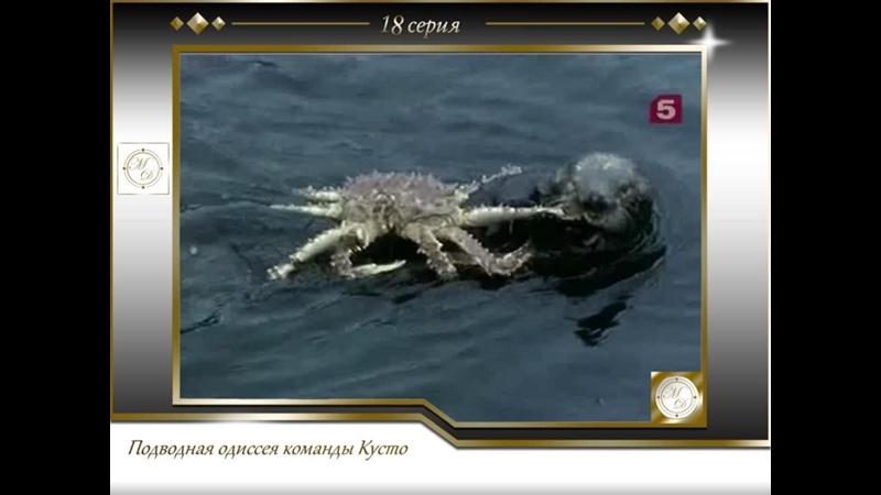 Подводная одиссея команды Кусто Выпуск 18 Непотопляемая морская выдра 18 1971
