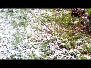 2020майСПб_майский-снег_в_саду_БА77