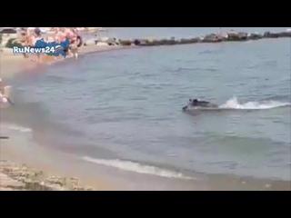 Дикий кабан выплыл из моря и атаковал отдыхающих в Германии