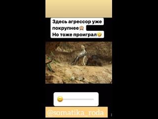Видео от Виолеты Левщановой