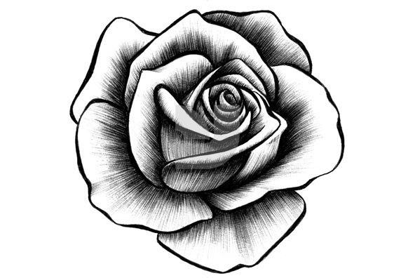 drawings of roses - 735×490