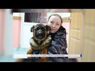 Кинологическая служба УФСИН по Марий Эл пополнилась шестью щенками породы «немецкая овчарка»