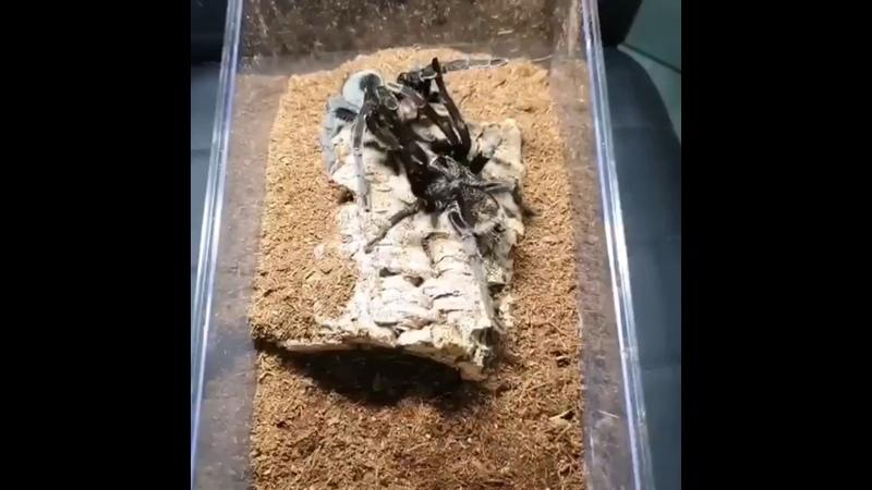 Видео от Наука Inc