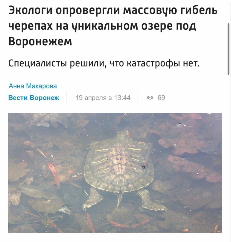 Специалисты не нашли следов массовой гибели черепах и рыбы на Черепашьем озере в...