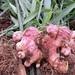 Итоговый урожай будет превосходить покупной