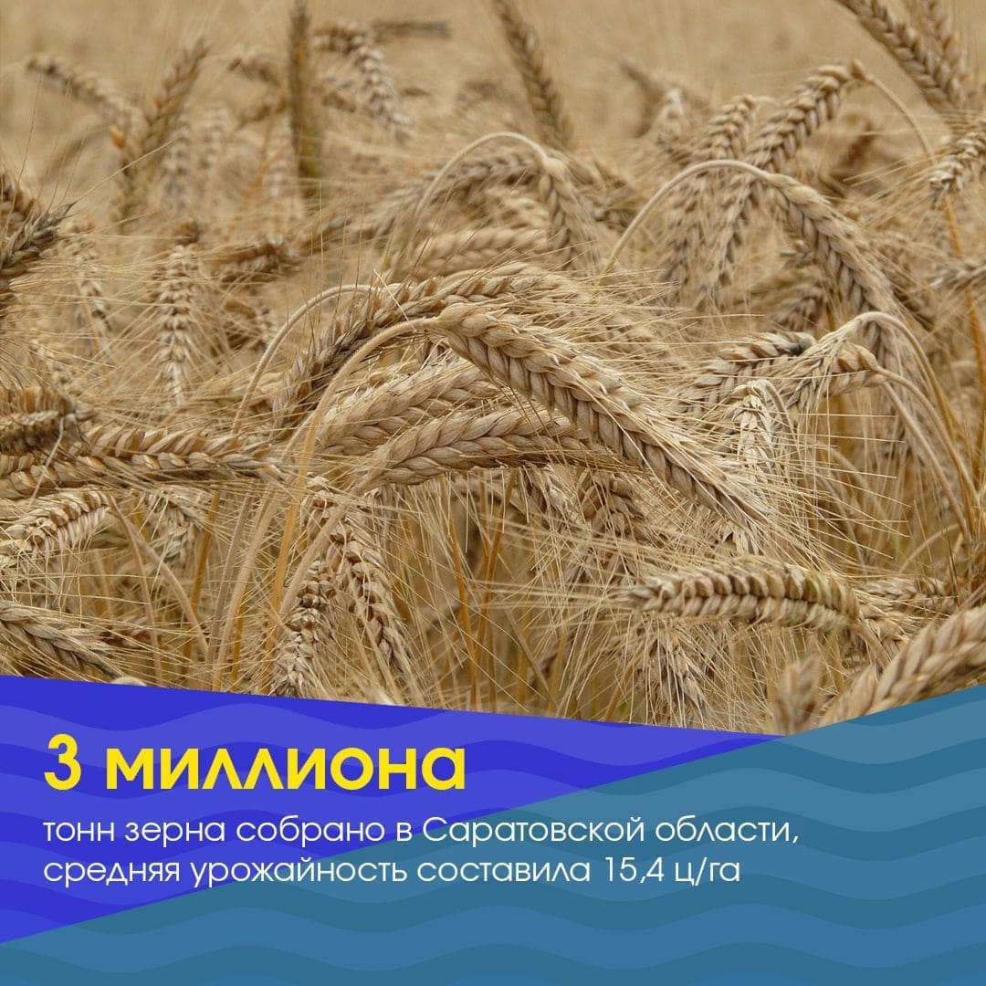 В Саратовской области собрано три миллиона тонн зерна