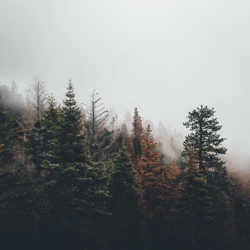 …а свод небес успел устать, накрывшись туче-ветошью –
