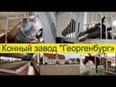 Экскурсии по Калининградской области. Конный завод Георгенбург 2019.