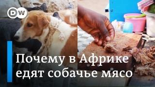 Собачье мясо: почему и как его едят | Видео не для слабонервных!