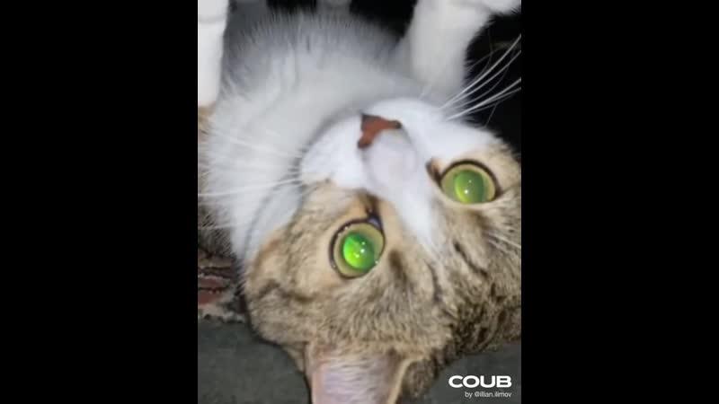 Кот Том Круз