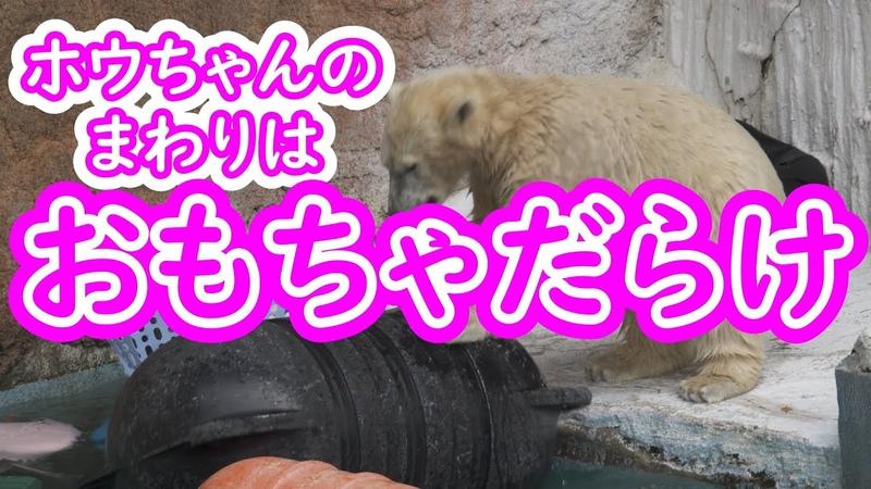 ホウちゃんのまわりはおもちゃだらけ💗 天王寺動物園
