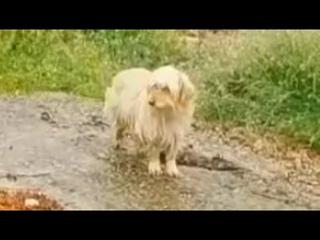 Весь в грязи, голодный и измученный пес потерял хозяев, и верно ждал их у обочины дороги