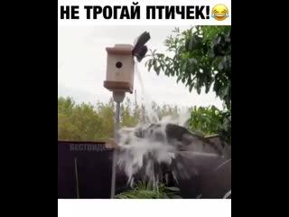 Классное решение - защита птиц от кота -