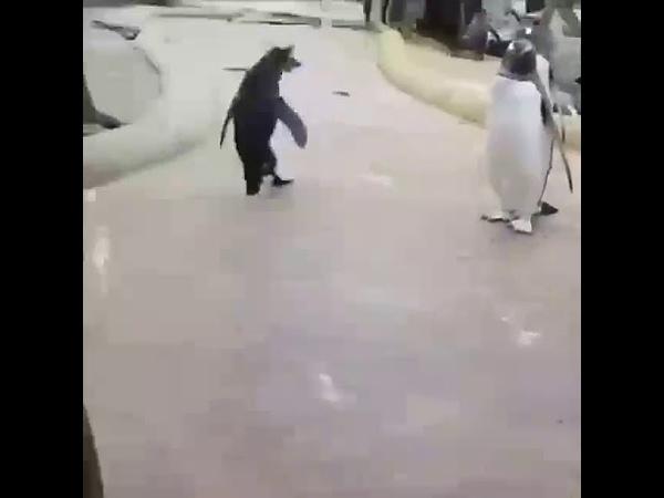 Пингвин поёт сегодня будет туса