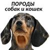 Собаки, кошки - породы