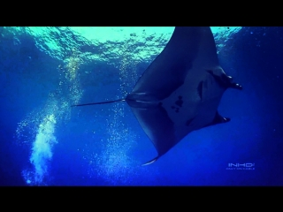 Гигантский Скат в глубоком море./Incredible Giant Manta in the Deep Sea./ (Wonderful Chill Out Music).