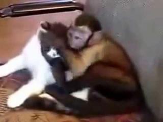 Кошка И Обезьянка целуются. Звериный позитив