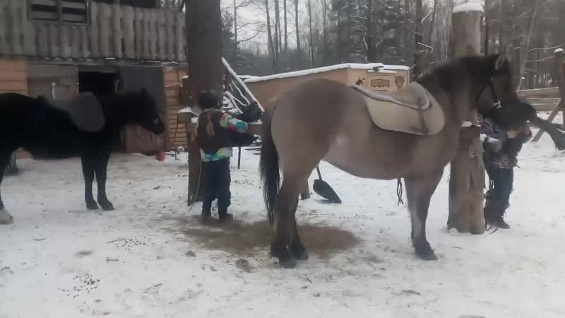 дети седлают коней