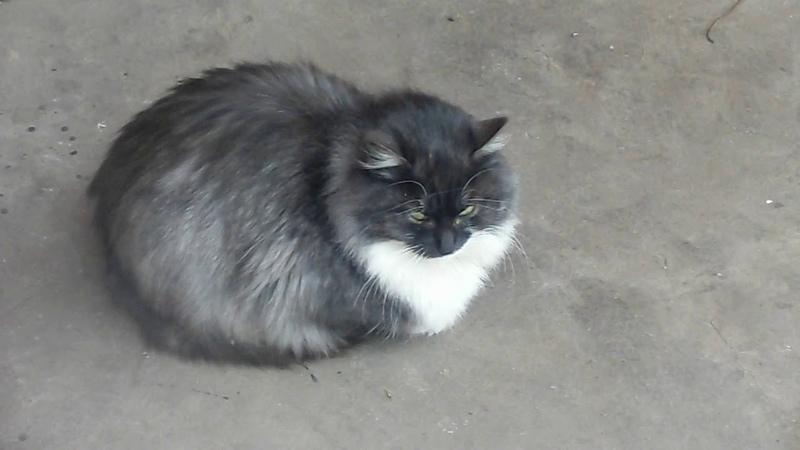 Дача Кошки Борьба за выживание Зимняя столовая для кошек из теплицы