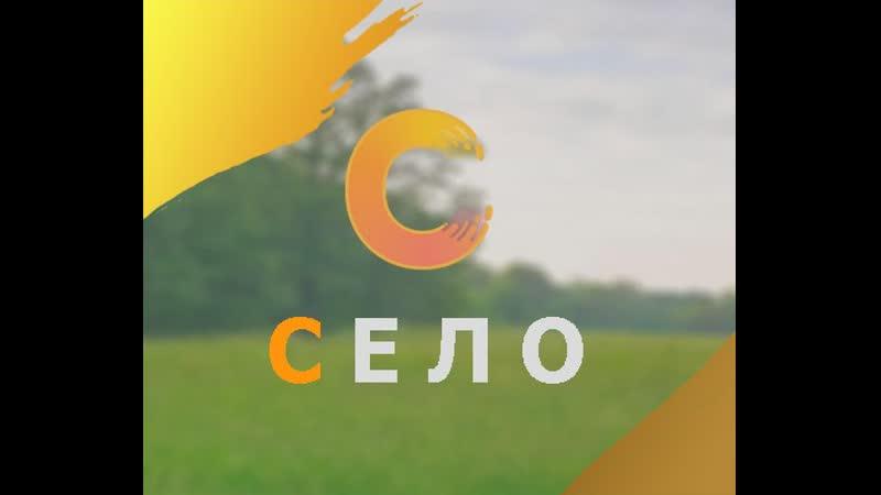 Итоги конкурса на 100 рублей а также ответы на вопросы из чата