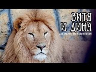Львы ВИТЯ и ДИНА в ожидании... (Презент: часть 1. Вручение) Life of #lions #animals