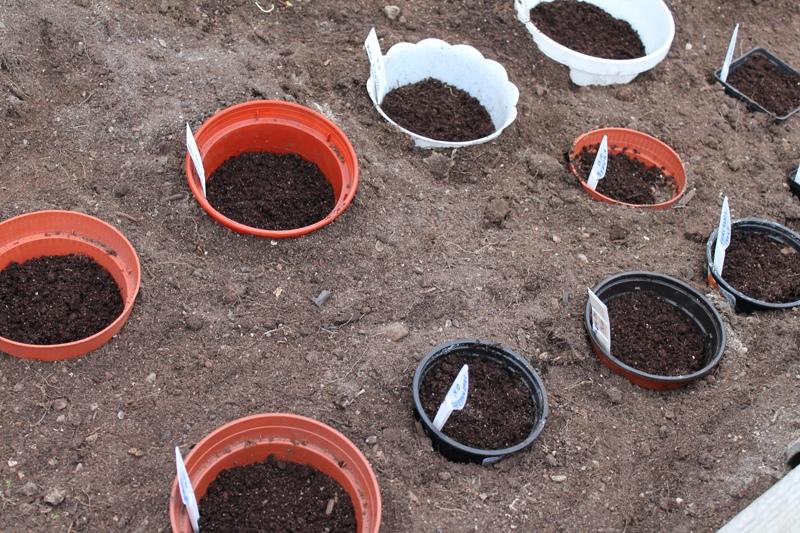5 рекомендаций при посадке семян
