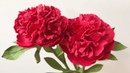 ABC TV   How To Make Peony Paper Flower With Shape Punch 1 - Craft Tutorial